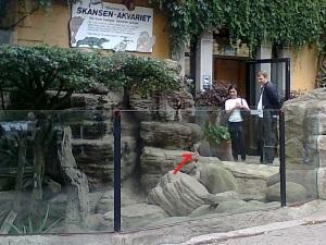 Litet djur vid Skansen-Akvariet