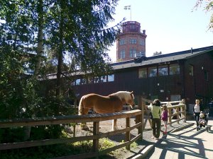 Häst vid stallet och Bredablick i bakgrunden