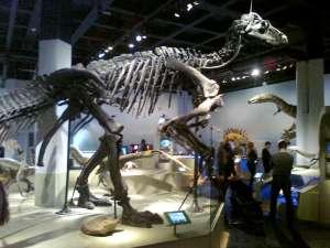 Fossil och evolution
